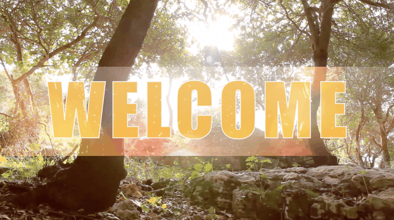 forest welcome video