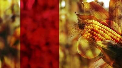 corn red strip still hd
